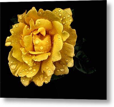 Lone Yellow Rose Metal Print by Stephanie Hollingsworth