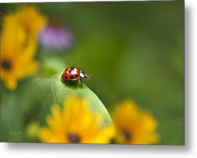 Lonely Ladybug Metal Print by Christina Rollo