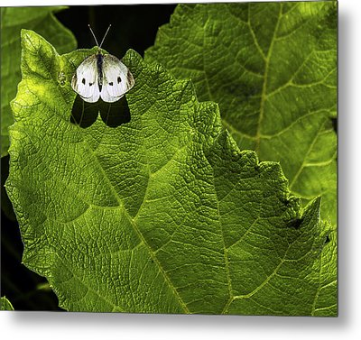 Lonely On A Leaf Metal Print by Tim Buisman
