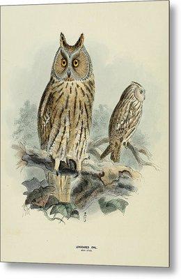 Long Eared Owl Metal Print by J G Keulemans