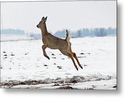 Look I Am Flying Metal Print by Lori Tordsen