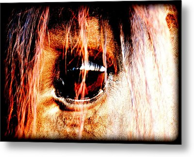 Lookin Right Back At You Metal Print by Kathy Sampson