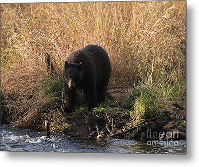Looking For A Meal Metal Print by Mike  Dawson