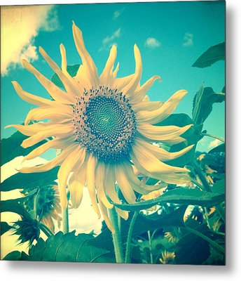 Looking On The Bright Side Metal Print by Joy StClaire
