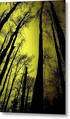 Looking Through The Naked Trees  Metal Print by Jeff Swan