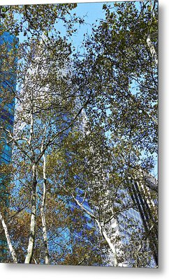 Looking Up From Bryant Park In Autumn Metal Print by Sarah Loft