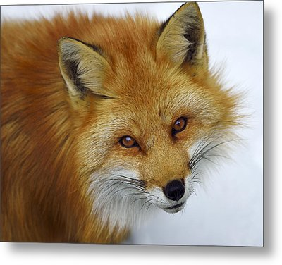 Looking Up Metal Print by Tony Beck