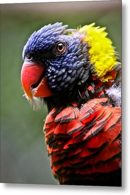 Lorikeet Bird Metal Print by Athena Mckinzie