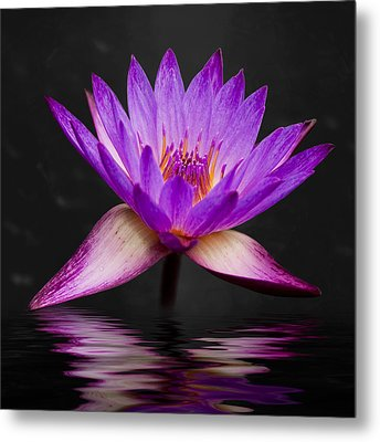 Lotus Metal Print by Adam Romanowicz