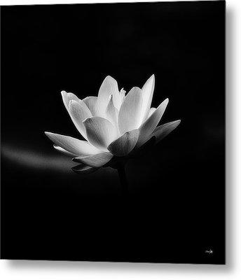 Lotus Metal Print by Scott Pellegrin