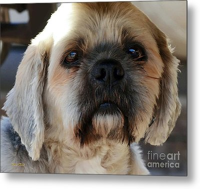 Louie Metal Print by Dale   Ford