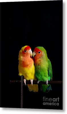 Love Birds At First Sight Metal Print by Syed Aqueel