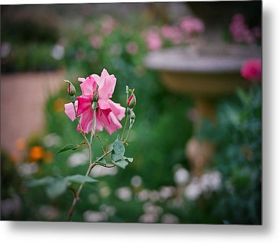 Lovely In Pink Metal Print by Linda Unger