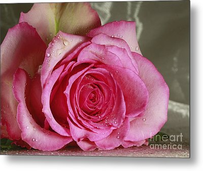 Loves Tender Moments Metal Print by Inspired Nature Photography Fine Art Photography