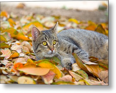 Loving Fall Colors Metal Print by Molly Heng