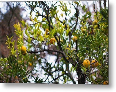 Low Angle View Of An Orange Tree Metal Print by Panoramic Images