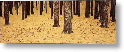 Low Section View Of Pine And Oak Trees Metal Print by Panoramic Images