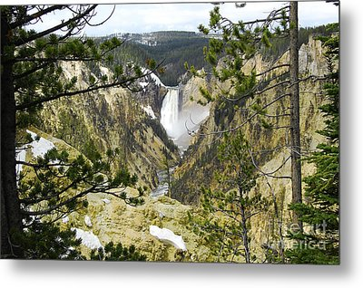 Lower Falls From Artist Point Yellowstone National Park Metal Print by Shawn O'Brien