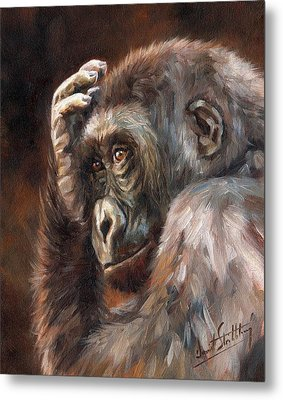 Lowland Gorilla Metal Print by David Stribbling