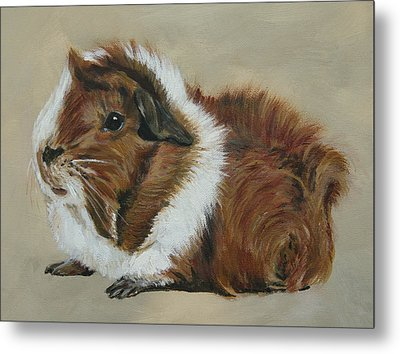 Lucky The Cutest Guinea Pig Metal Print by Lyndsey Hatchwell