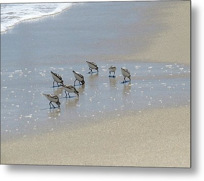 Lunch At The Beach Metal Print by Zina Stromberg