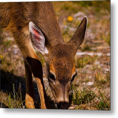 Lunchtime In The Forest Metal Print by Jordan Blackstone