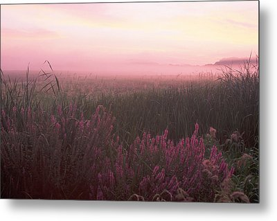 Lustrife Sunrise Great Meadows Concord Ma Metal Print by Bucko Productions Photography
