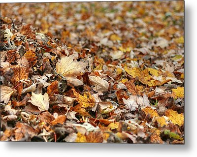 Lying On The Ground Metal Print by Ester  Rogers