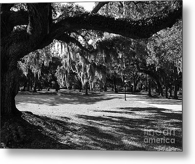 Made In The Shade  2 Metal Print by Mel Steinhauer