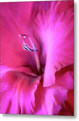 Magenta Splendor Gladiola Flower Metal Print by Jennie Marie Schell