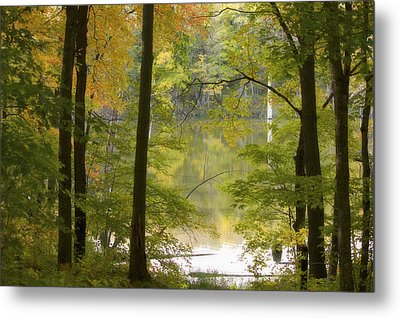 Magical Maplewood Metal Print by Penny Meyers