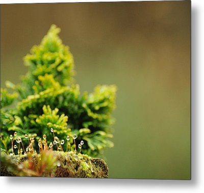 Magical World Of Green And Gold Metal Print by Rebecca Sherman