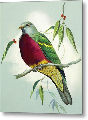 Magnificent Fruit Pigeon Metal Print by Bert Illoss