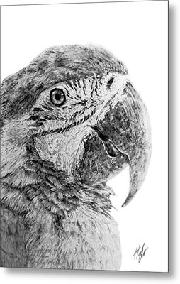 Magnificent Macaw Metal Print by Hannah Taylor