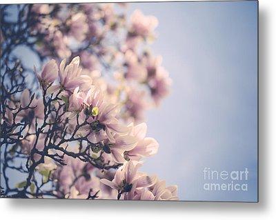 Magnolia Flowers Metal Print by Nailia Schwarz