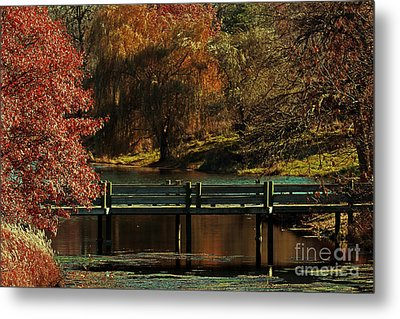 Mahoney State Park Metal Print by Elizabeth Winter