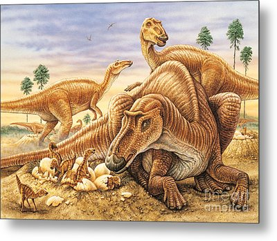 Maiasaura And Nest Metal Print by Phil Wilson