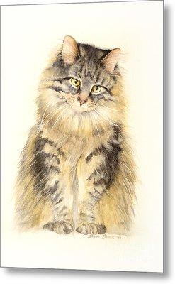 Maine Coon Cat Metal Print by Bonnie Rinier