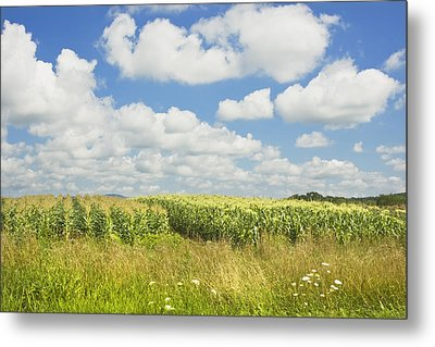 Maine Corn Field In Summer Photo Print Metal Print by Keith Webber Jr