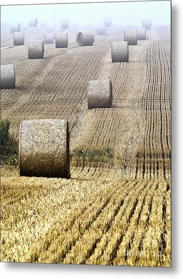 Make Hay While The Sun Shines  Metal Print by Heiko Koehrer-Wagner