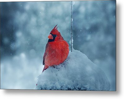 Male Cardinal In The Snow Metal Print by Sandy Keeton