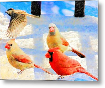 Male Cardinal With Two Females And Junco Metal Print by Janette Boyd