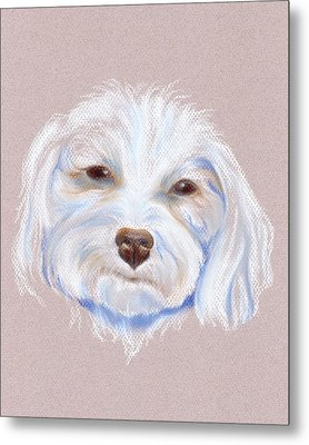 Maltipoo With An Attitude Metal Print by MM Anderson