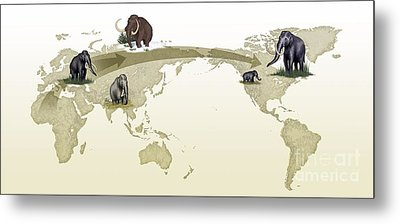 Mammoth Evolutionary Migration Metal Print by Spl