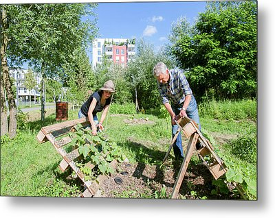 Man And Woman Gardening Metal Print by Gombert, Sigrid