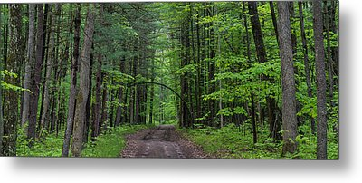 Manistee National Forest Michigan Metal Print by Steve Gadomski