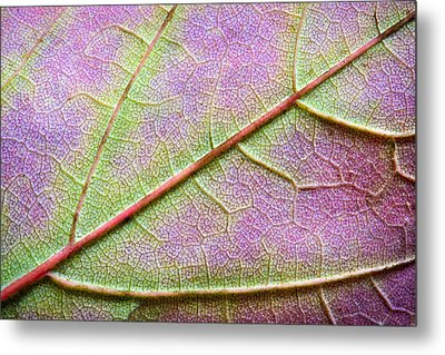 Maple Leaf Macro Metal Print by Adam Romanowicz