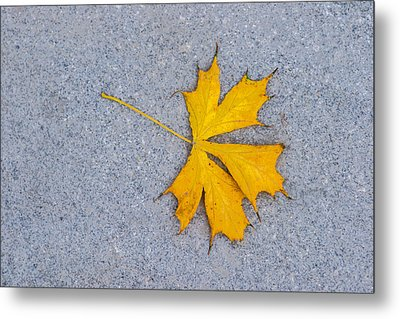 Maple Leaf On Granite 5 Metal Print by Alexander Senin