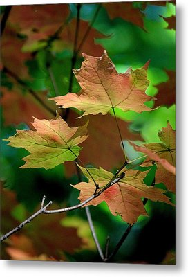 Maple Leaves In The Shadows Metal Print by Rosanne Jordan