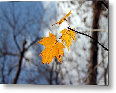 Maple On The Blue Metal Print by Abril Gonzalez